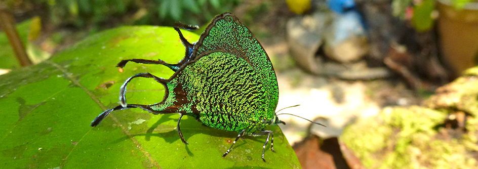 butterfly-944x334